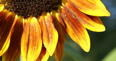 'Mac-simize'   your  summer