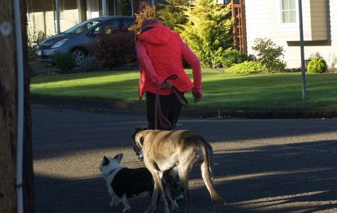 Linfield's committed dog walker