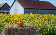 Pumpkin patches perfect for weekend escape