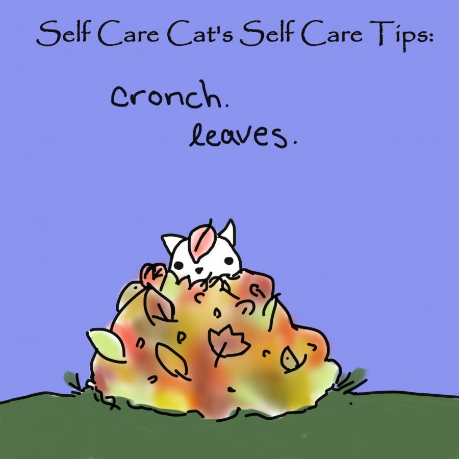 Cat's self care tips