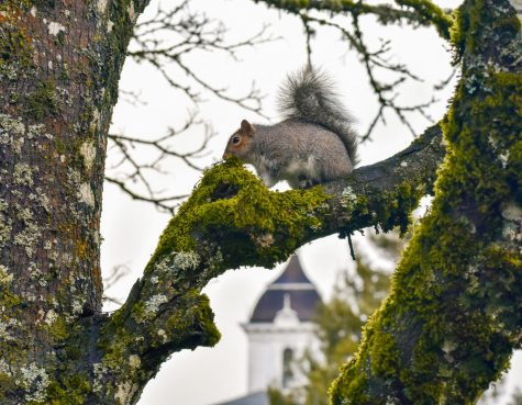 Squirreling around: when we all fall asleep, where do squirrels go?