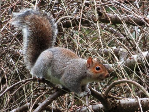 Squirreling around: it's not me, it's you