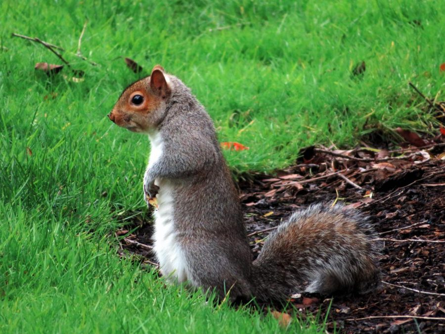 Squirreling around: maybe it's time for a change