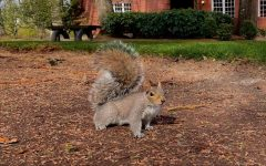 Squirreling around: What I hate