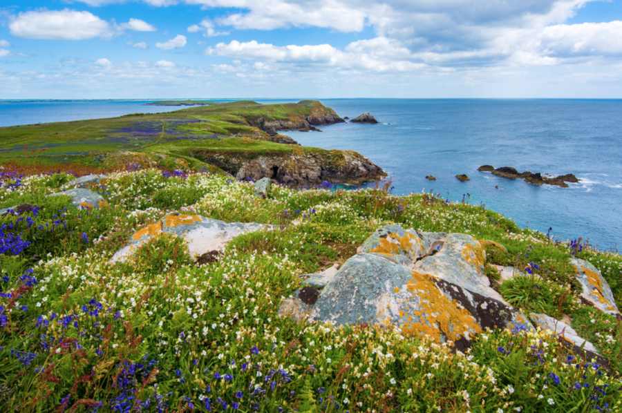 Saltee Island, Ireland.